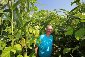 Karl-Heinz Kustermann in seinem 2015er Mais/Bohnen-Mischbestand