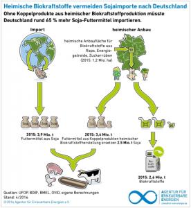 Biokraft