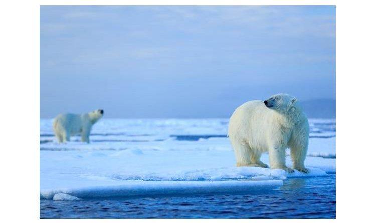 Eisbären in Sicht: Intelligente Videoüberwachung von Bosch auf einer  Bohrinsel in Alaska