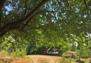 YOKOHAMA-Cash-Back-Aktion mit Baumspende