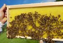 HUF HAUS mit Bienenprojekt