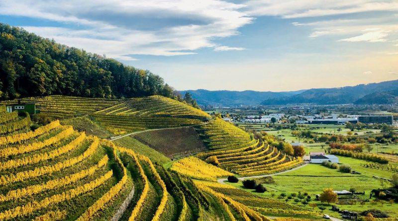 Foto: Badischer Wein GmbH